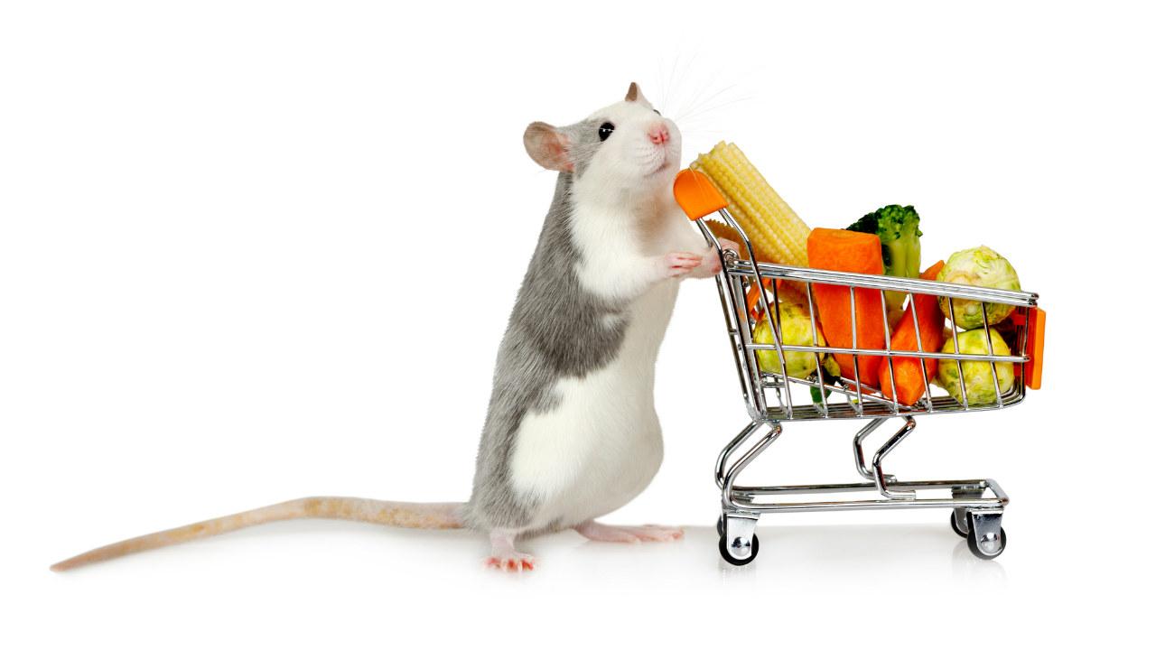 貪欲にネズミ駆除10年「ドツボにはまった」超恐るべし世界が…