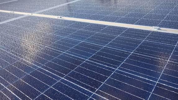 雑草対策にヤギを飼ってみたが…太陽光発電のメンテナンス事情