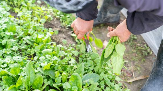 「タマネギ植え替えた」だけで農家が1000万円節税。そのワケ