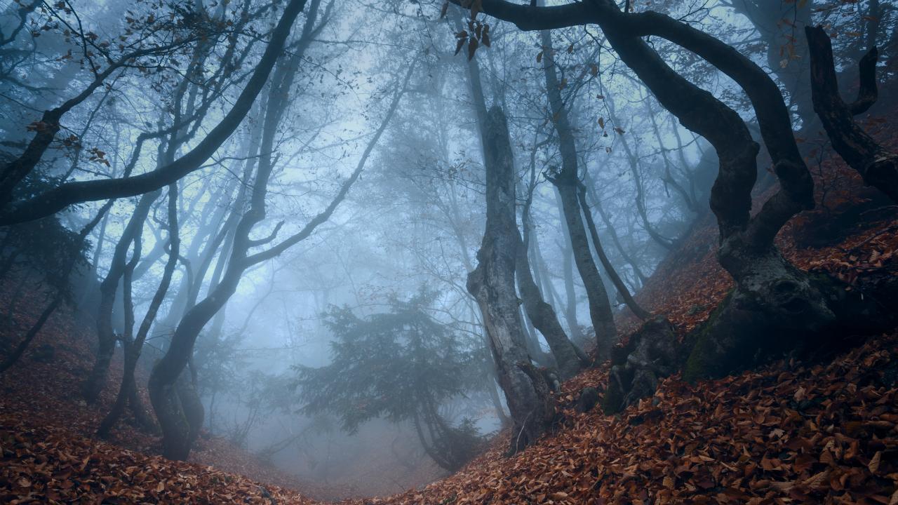 林で患者が変死…『八王子判決』は医師法第20条を誤読した?