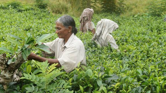スリランカ経済発展の懸念材料「労働力」不足の実態とは?