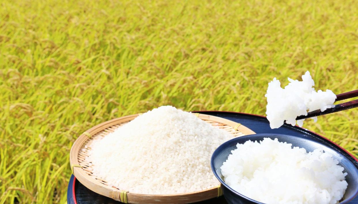 市の臨時職員が、「ローマ法王」に地元の米を献上してみたら…