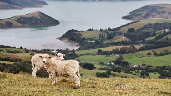 NZの街「プケコヘ」で盛んなランドバンキング投資法とは?