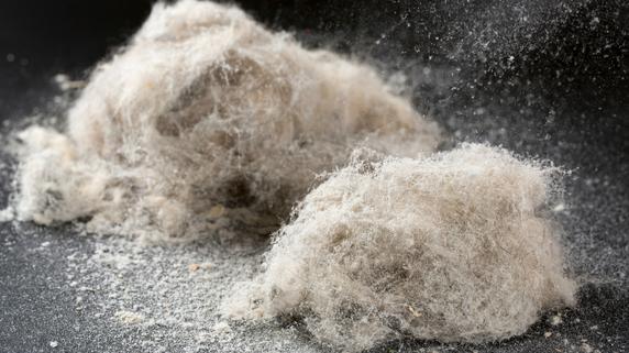 カビ・ホコリが直接肺に…「高気密・高断熱住宅」のリスク