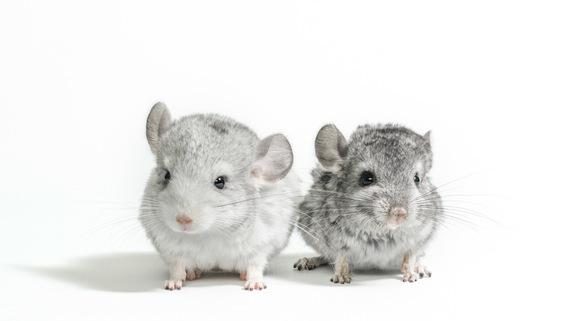 「小さい、好き…だが必ず滅ぼす」ネズミ vs 駆除プロ男の死闘