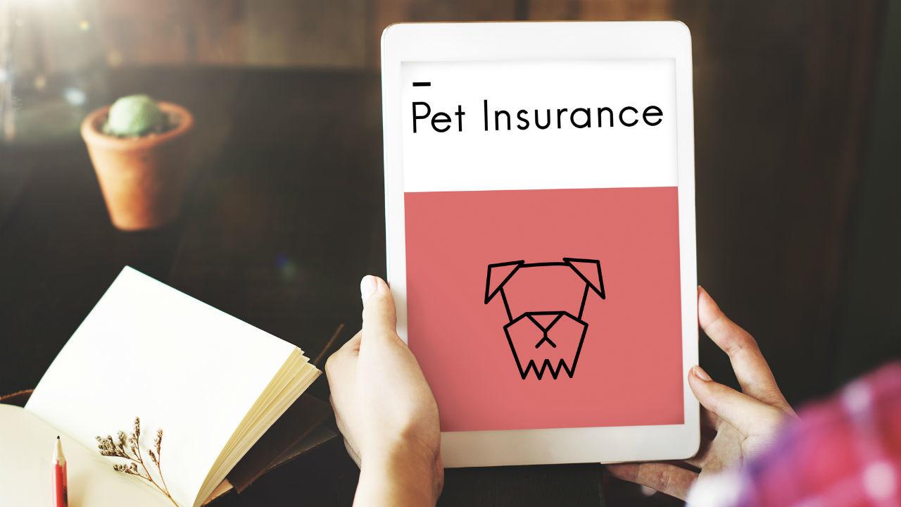 ペット保険、加入広がる 保険に入っていると…