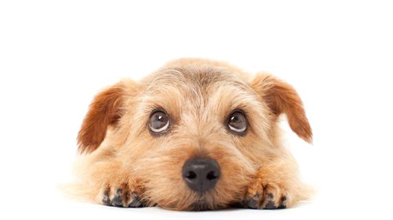 動物病院で欠かせない防音・防臭・防護に対する配慮
