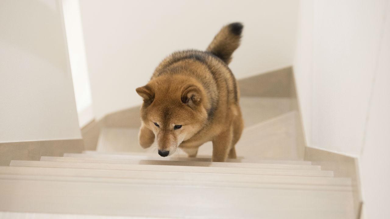 即入居率100%に… 「ペットと暮らす」福祉施設の収益力