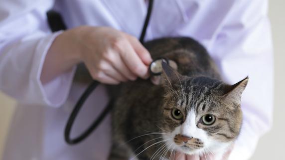 経営者として自覚すべき動物病院の「院長の職責」とは?