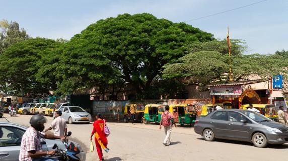 驚異の2台に1台!インドでスズキ車が異常に愛される理由