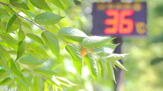 全国36地点で猛暑日 富山36.9度、都心は32度 猛暑関連銘柄は・・・