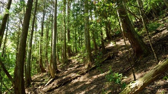 住宅街のなかにある山林の評価額、いくらが適正?