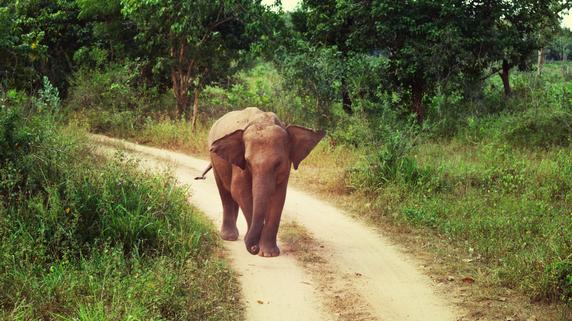 スリランカ政府は「パナマ文書」に載った者を処罰できるか?