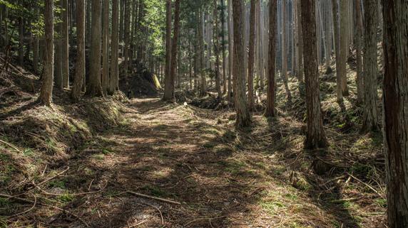 財産の中に「山林」が…相続対策のポイントは?