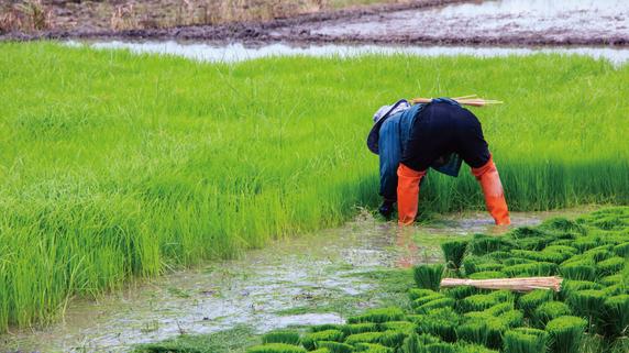 日本の支援で開発が進む「ラオス」の農業マーケット
