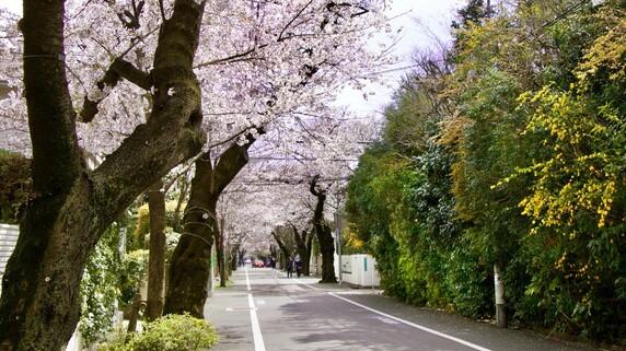 「憧れの町」世田谷に「ひきこもりシニア」が多い驚きの理由