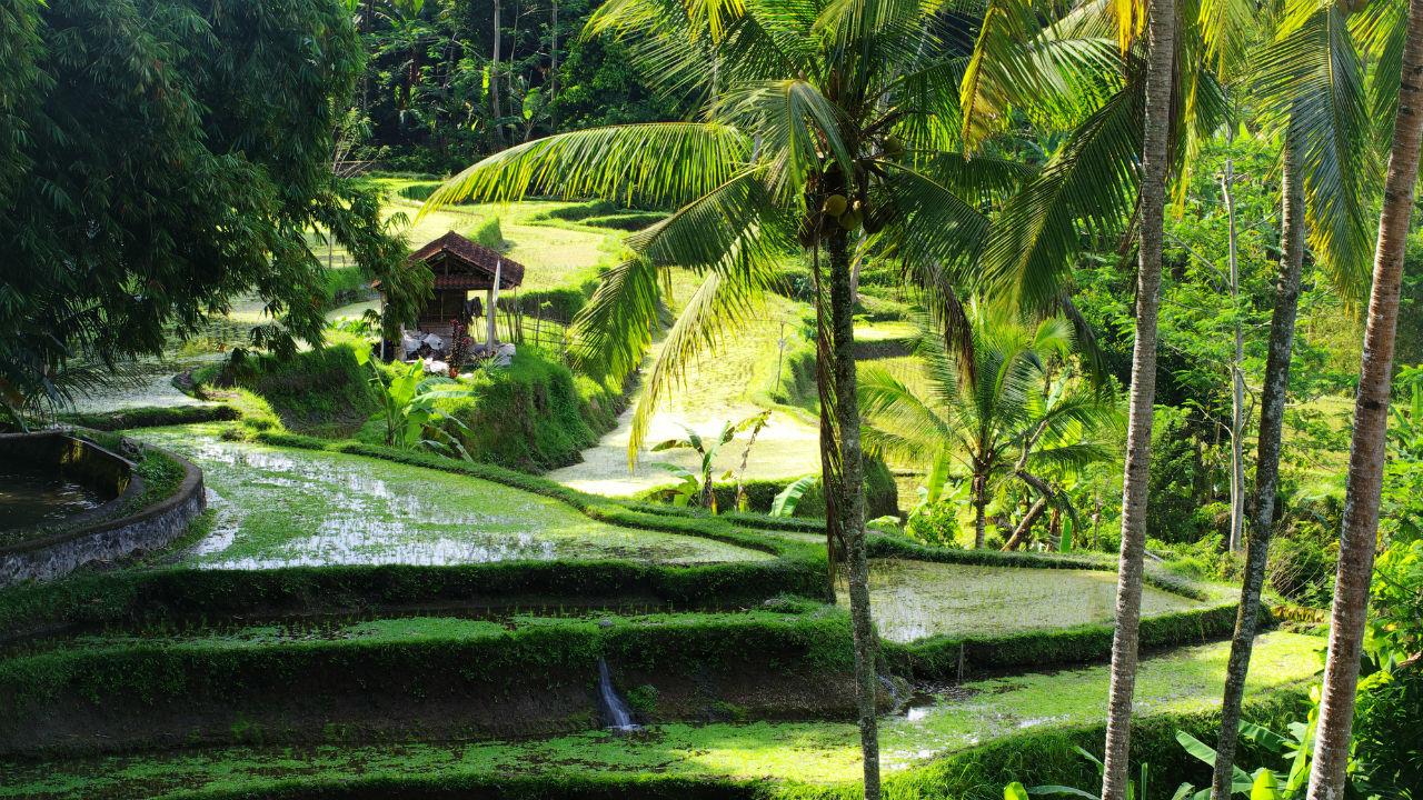 バリ島の不動産投資・・・「ヴィラ」の経営に適した立地とは?