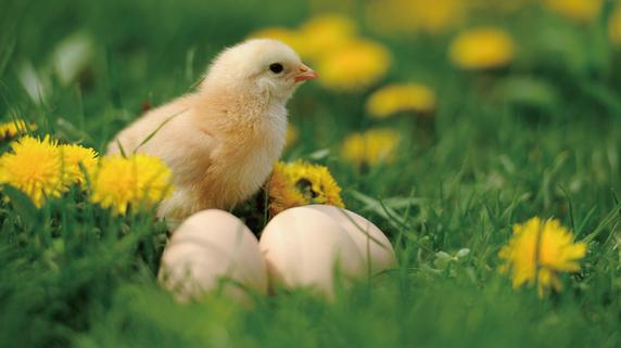 自分自身が「金の卵を産むニワトリ」になる方法