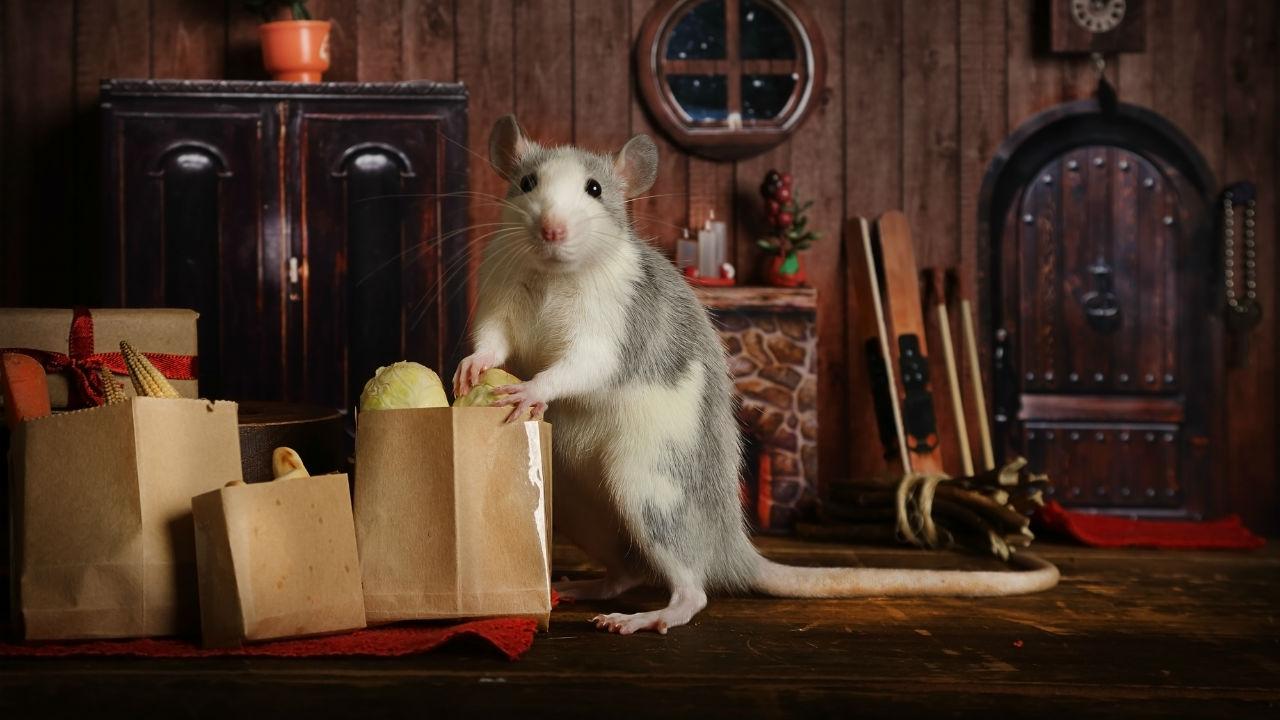 ネズミ vs 駆除プロ男「すし屋に捕獲具」設置したら事件が…