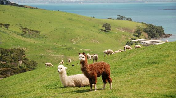 100万NZドルで売買されるニュージーランドの物件とは?