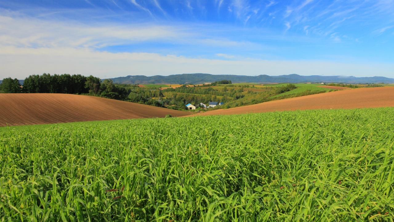 農地や山林はどのように相続税評価をするのか?