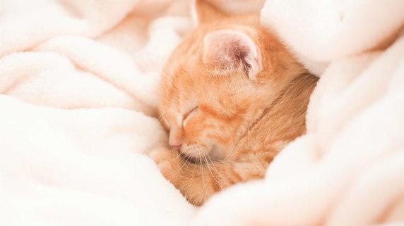 猫の爪痕で柱がボロボロ…「ペットの物件トラブル」貸主の声
