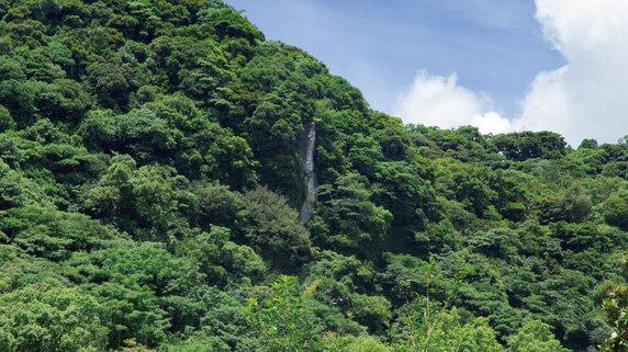 日本の「木質エネルギー活用」が大幅に遅れている理由