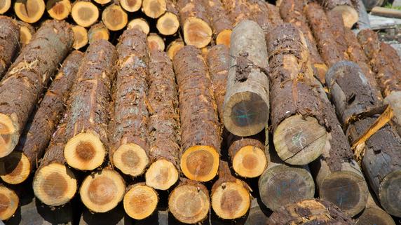 斜陽産業の木材加工業 新興国に活路を見出した事例