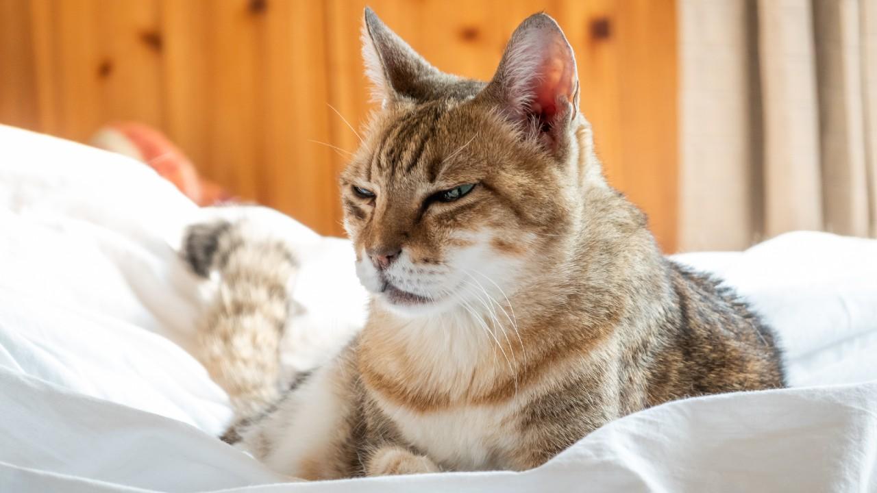 わが人生の師の忠告「40歳まで猫を飼ってはいけない」理由