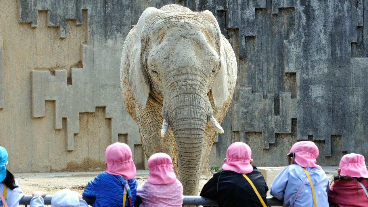 東大入試「ゾウと1秒はどちらが大きいか」、どう答えるか?