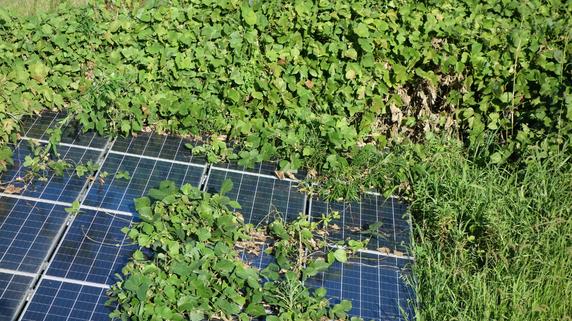 300万円入金後に業者が倒産…「太陽光発電投資」の落とし穴