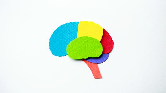 脳の重さから見る「6歳までの環境」が、「超重要」である理由