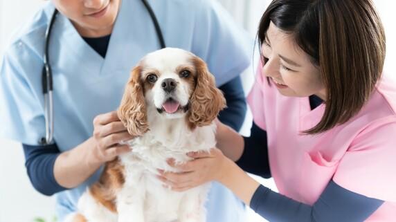 獣医師試験「大学別合格ランキング21」100%合格は2大学