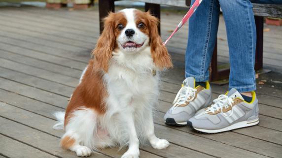 愛犬に財産を遺すことは可能か?
