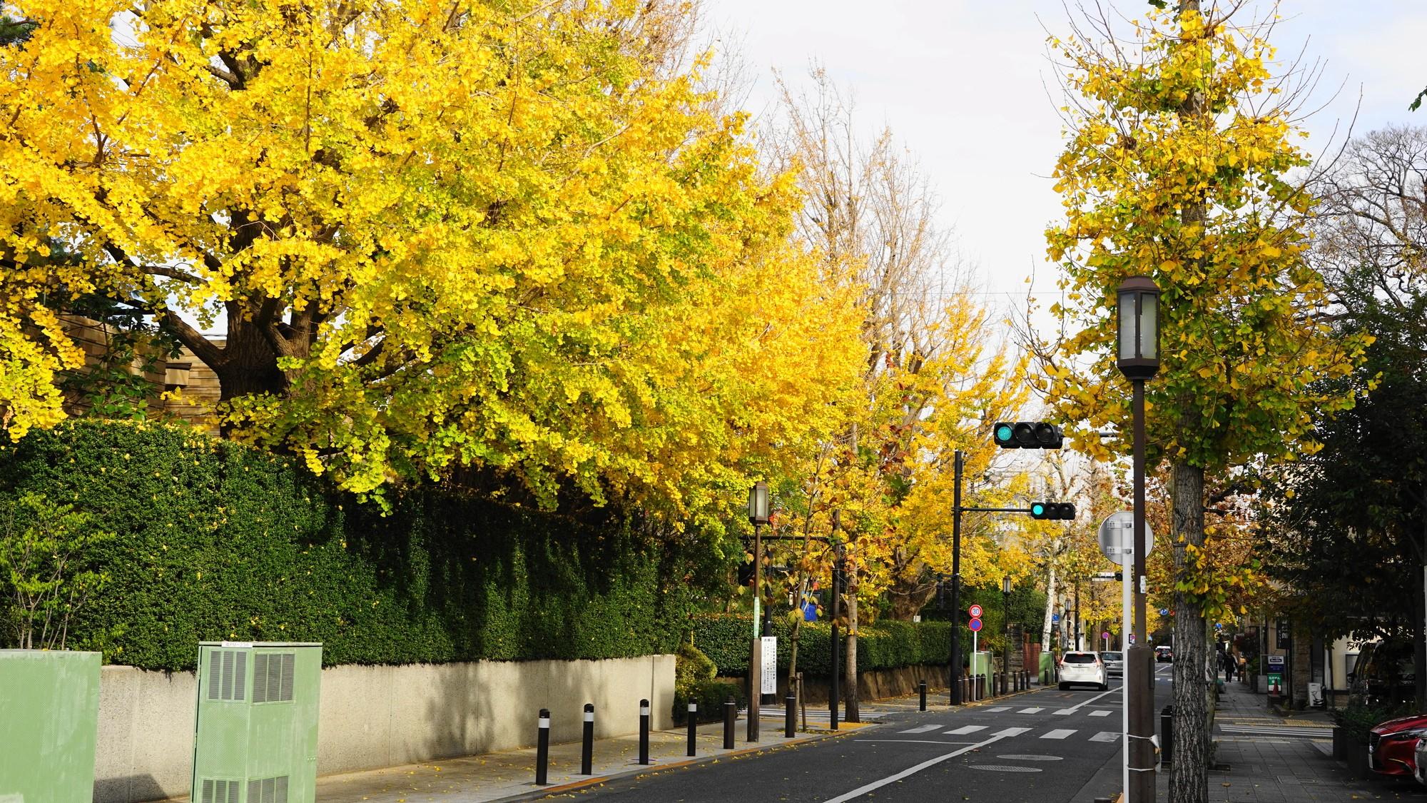 緑美しいお屋敷街「世田谷区成城」高級住宅地の地位は守れるか
