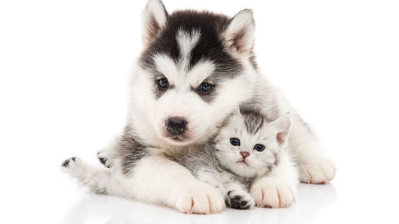 ペット保険収入 初の100億円超え 小さな記事ですが・・・
