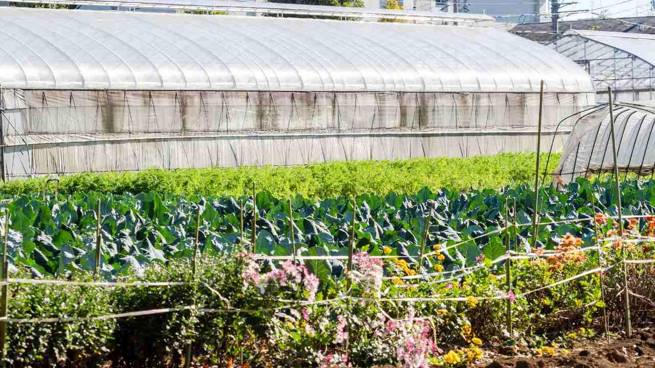 生産緑地「解除か否か」都市農家が苦悩する2022年の分かれ道