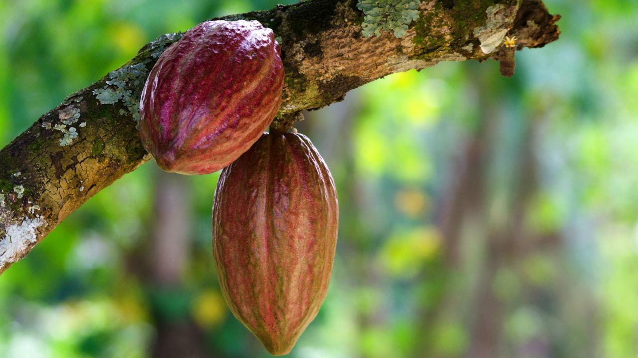 高利回り+社会貢献・・・「カメルーン農業支援ファンド」の魅力