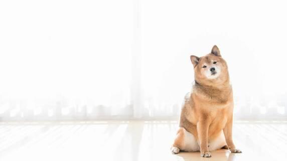 ペットの犬・猫の生涯に「いくらかかるか」知っていますか?