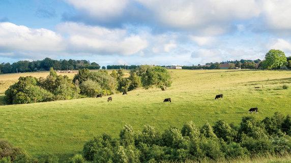 NZの農場で生まれている「新たなビジネスチャンス」とは?