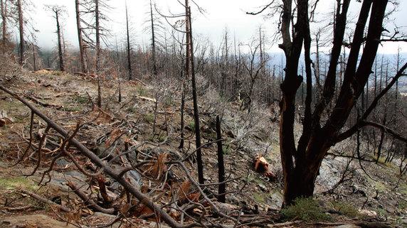 米国不動産投資における「山火事」のリスクとその対策