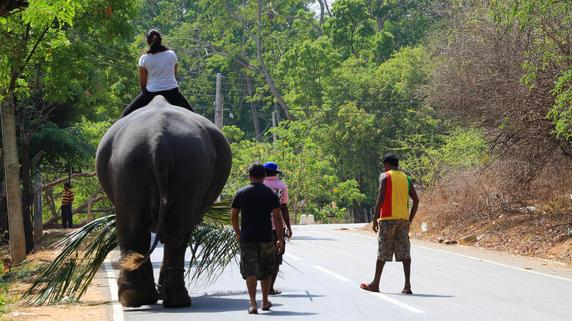 スリランカ金融市場、リスク軽減に向けて証券会社に新たな規制
